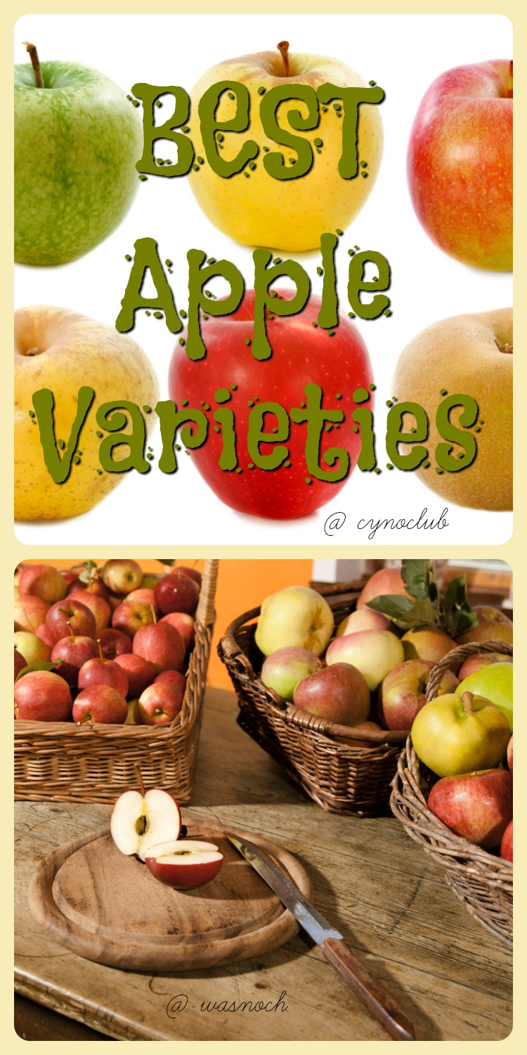best-apple-varieties