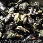 Wild Maine Mussels: How To Cook The Best Tasting Johnny's Blues
